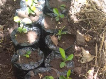 Reforestación-en-Molino-Sur