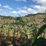 Altos costos de insumos, bajos precios del mercado y afectaciones climáticas siguen perjudicando producciones de frijol y maíz