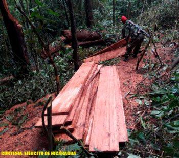 Despale indiscriminado en la biosfera de Bosawás tendrá graves consecuencias, según especialista