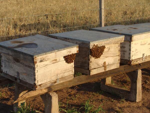 Temporada lluviosa podría afectar la apicultura
