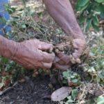 Agricultor diversifica su parcela en invierno y verano