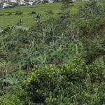 Más mujeres a cargo de proyectos agrícolas