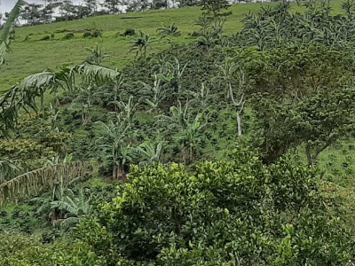 Agricultura-en-las-comunidades