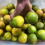 Cítricos aumentan su precio según comerciantes