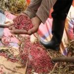 Productores trabajan la tierra con prácticas agroecológicas
