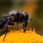 Lluvias provocan pocas pérdidas de colmenas y floración en otras